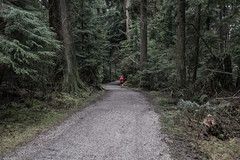 Walk in the park (vancouvertones) Tags: stanleypark vancouver wild tree forest canada park pwn pacificnorthwest wilderness britishcolumbia