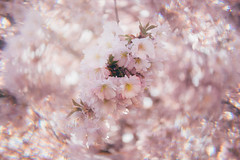 Think Pink! (freyavev) Tags: cokin cokinfilter filter prismeffect retro pink thinkpink blossom cherryblossoms cherryblossom cherry japanesecherry vsco canon canon700d bokeh bokehlicious circularbokeh leonberg badenwürttemberg germany deutschland