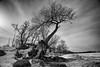 DSC_2821-Editbw (Eric Hartke) Tags: aop beach keswick outdoors photoassignments tree winter nikond700 landscape blackwhite 1735mmf28d wideangle