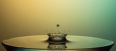 The crown (Explored) (susie2778) Tags: water studio splashartkit2 splash crown olympus omdem5mii 60mmmacrof28 waterdrop