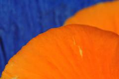 blue & orange (nirak68) Tags: 092365 orangeandblue 2017ckarinslinsede stiefmütterchen blütenblatt tonglasur blumentopf lübeck deutschland schleswigholsteinkreisfreiehansestadtlübeck ger petal catchycolors