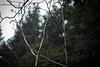 Ještěd (kaddafi210) Tags: pancolar 50mm pancolar1850 1850 m42 samsung samsungnx210 mirrorless czech retro carlzeissjena ausjena gdr nature forest place bokeh light