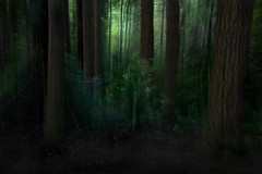the way home (birdcloud1) Tags: forest icm intentionalcameramovement trees green amandakeoghphotography amandakeogh birdcloud1 canoneos80d eos80d canon1855mmlens 1855mm grow thewayhome belatedhappyearthday
