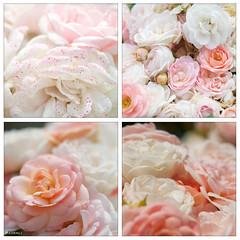 sweet_romance