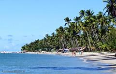 Praia de Carneiros 2 - Pernambuco (Antonio Marin Jr) Tags: antoniomarinjr praiadecarneirospernambucobrasil beach praias praia brasil pernambucobrasil landscape paisagem