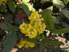 2017-03-28-8048 (vale 83) Tags: springtime nokia n8 macrodreams beautifulexpression thebestyellow autofocus