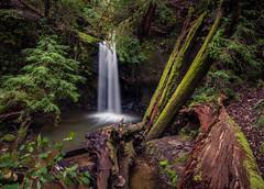 Big Basin State Park, CA (Juan Pablo J.) Tags: park nature naturephotography naturaleza outdoors landscapes longexposurephotography water waterfall silkywater green photography juro sonya68 tonikasd1116f28dx tree textured