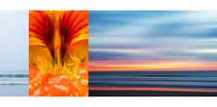 Colours Of The Coast (red stilletto) Tags: apollobay apollobayvictoria apollobaybeach thegreatoceanroadvictoria greatoceanroad greatoceanroadvictoria beach sea ocean waves surf flower nasturtium colourpalette colourpalettes colourpalettetriptych