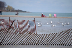 Beach waves. (Bad Alley (Cat)) Tags: toronto beach woodbinebeach lakeontario lake fence snowfence redfence bent wavy