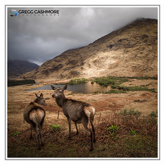 GLEN ETIVE, SCOTLAND. (Gregg Cashmore) Tags: scotland view deer animal nature mountain gregg cashmore photography canon sigma landscape wildlife sky cloud rocks glen etive highlands vista exposure coe glencoe north rannock mor moor square crop loch lake water hill