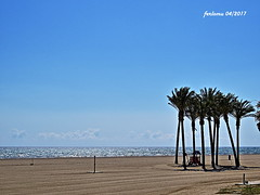Almería. Roquetas. Playa01 (ferlomu) Tags: almeria andalucia arbol ferlomu mar palmera