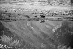 Ripples (Mario Ottaviani Photography) Tags: sony sonyalpha italy italia paesaggio landscape travel adventure nature scenic exploration view vista breathtaking tranquil tranquility serene serenity calm marioottaviani ripples increspature riflesso reflexes horse cavallo blackandwhite blackwhite biancoenero monochrome monocromatico monocromo lake lago