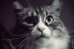 Beware of the cat (Miguel Puerta) Tags: mpuerta 2017 canon animales animals mascotas pets felino feline gato cat kitten bigotes whiskers beautifulexpression