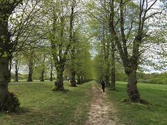 Limes Avenue (jovike) Tags: animal cockfosters dog enfield espe london park tree woman
