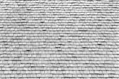 Nikon Rangefinder Month Ilford PanF+ TD-201 (Man with Red Eyes) Tags: roof analog blackwhite oak centre preston visitor ilford shakes panf homedeveloped panfplus brockholes td201 nikons3olympic a3minsb3mins 105pnikkorf25smount nikonrangefindermonth