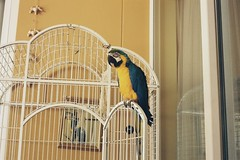 Parrot (milesjarrett) Tags: sun film dubai warmth april ektar werra colorplus