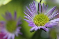 Lovely Purple (Jamie-Owens) Tags: