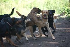 (coopersdogpatch) Tags: dogs frank dance albert cooper 2009 ours autzen lainey