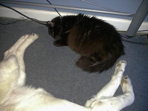 Sleeping Buddies.jpg