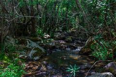 Bosque encantado (Roberto EYEPICS) Tags: espaa rio andaluca agua bosque arroyo cascada alcaldelosgazules