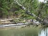 Fenland Trail (II) (Pepe (JmCP)) Tags: canada olympus alberta bow banff rockymountains fenland rocosas canadianrockies fenlandtrail canadá epm1