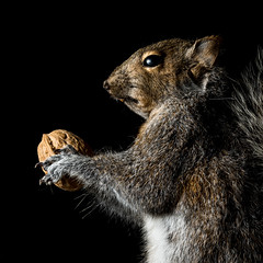 A Squirrel & His Nut (PhotoAbuse) Tags: stilllife