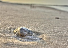 DSC04819_tonemapped (David Youngblood) Tags: beach coast sand sony alabama shell seashell orangebeach sonya77 slta77