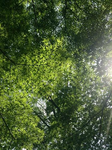 Higashiyama Botanical Garden 1