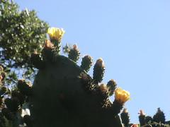 CIMG6391 (kazadmanesh) Tags: و بهار خشکسالی