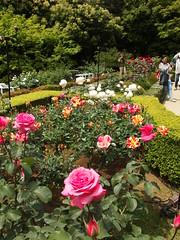 Rose Festival @ Kyu Furukawa Garden (*_*) Tags: park tree green nature rose festival japan garden french japanese tokyo spring asia traditional may sunny bara kita matsuri kanto kitaku 2014 nishigahara 旧古河庭園 conder kyufurukawagarden