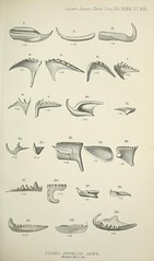 n466_w1150 (BioDivLibrary) Tags: geology periodicals smithsonianlibraries bhl:page=39014468 dc:identifier=httpbiodiversitylibraryorgpage39014468