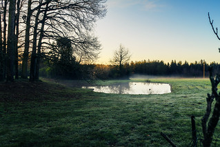 Morning ducks on the pond - HDR