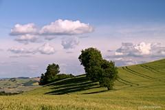 Italian countryside (claudiophoto) Tags: italy panorama verde green nature canon landscape spring nuvole colours natural country grain natura hills getty colori paesaggi marche trentino grano colorphotoaward bellitalia paesaggiitaliani paesaggidellemarche claudiophoto marchepaesaggi fotodellemarche
