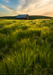 Still Standing (Jim Patterson Photography) Tags: green rural landscape washington spring farming rustic pullman americana tradition agriculture pastoral eastern rollinghills colfax agricultural palouse jimpattersonphotography jimpattersonphotographycom seatosummitworkshops seatosummitworkshopscom