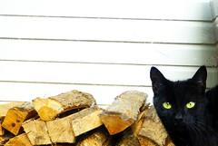 Houtblok Kat (Lixizzy) Tags: black window eyes kat wijnstraat blocks poes raam