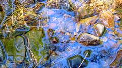 Stream Reflection 1 (mahler9) Tags: reflection nature water boston underwater stones massachusetts arboretum arnoldarboretum jaym tkrkp mahler9 chromocosm andantecomodofotos