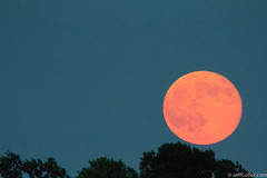 Supermoon over the trees in Cohasset (jeffcutler) Tags: moon beach canon lens boat sigma fullmoon moonrise algae cohasset jeffcutler supermoon