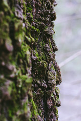 La ye rs (Arina Borevich) Tags: summer brown plant color tree green texture nature vertical closeup forest canon season 50mm moss spring flora natural russia bokeh nopeople part bark trunk environment russian textured 30d canon30d moscowregion canoneos30d pentaxm50mm vsco vscofilm