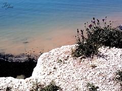 Schnheit am Abgrund  (wiesenfee) Tags: unitedkingdom kreidefelsen klippe