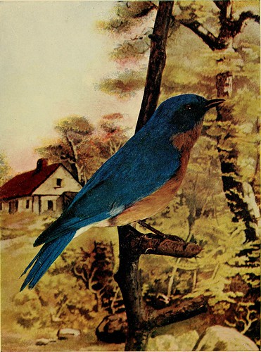 """Image from page 6 of """"Birds : illustrated by color photography : a monthly serial .."""" (1897)"""