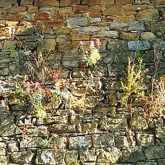 On The Road Beautiful Nature Nature_collection Sunshine ☀ at Hotel La Riana Perinaldo (duldinger) Tags: ontheroad beautifulnature naturecollection sunshine☀