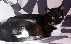 Colina 22 (Asociacin Defensa Felina de Sevilla) Tags: espaa sevilla gatos felinos animales gatitos adoptar protectora adopciones apadrinar gatosurbanos defensafelina asociacindeanimales coloniasdegatos proteccindegatos activismoporlosanimales