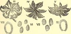 Anglų lietuvių žodynas. Žodis pharmacognostic reiškia farmakognozinis lietuviškai.