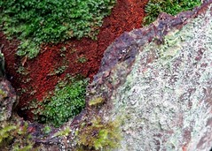 Rainforest textures (Ruth and Dave) Tags: wood orange green rotting grey moss log colours delta textures lichen burnsbog