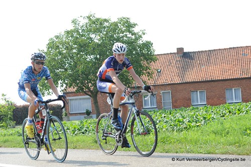 Geel Oosterlo  (180)
