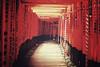 京都市 Kyoto + Inari + Torii | Japan, July 2014 (Sebastien BERTRAND) Tags: japan canon kyoto inari streetphotography streetphoto torii japon photoderue 伏見稲荷大社 京都市 eos40d canon40d fotomato sebfotomato sébastienbertrand sebastienbertrand