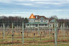 They grow grapes in the front yard (tmattioni) Tags: hff valenzano vineyard shamong 52in2017challenge 4952in2017challenge travel