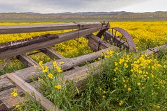(Marc Crumpler (Ilikethenight)) Tags: landscape usa california carrizoplain carrizoplainsuperbloom carrizo wagon flowers wildflowers goldfields hills clouds canon canon6d 6d 24105mmf4l marccrumpler