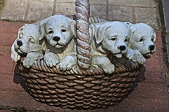 Dogs in Basket (hbickel) Tags: ceramic dogs basket puppies canont6i canon photoaday pad