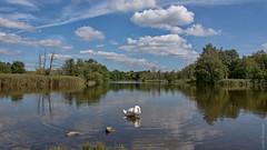 Köppchensee (marionB-fotografie) Tags: see natur himmel wolken schwan tegelerflies
